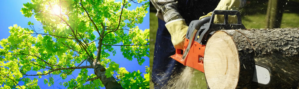 Tree Services Thornton